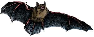 Pipistrelle-Bat2