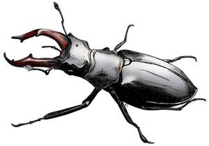 Stag-Beetle2